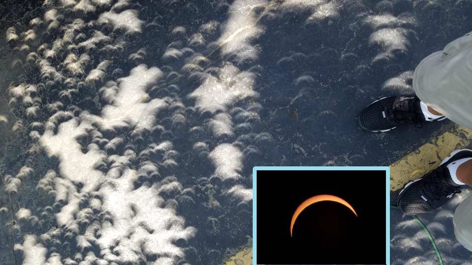Mini partial eclipse images from filtering through a tree with leaves. Carolo Garces, MAS image.>