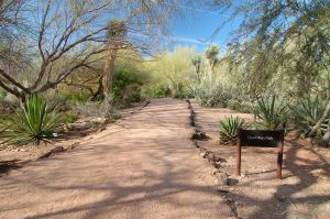 Desert Botanical Garden Grounds